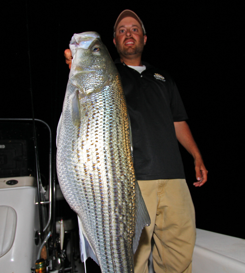 march 2012 night fishing striper lb3 800px